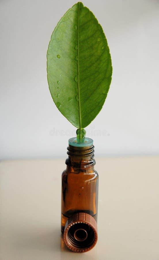 Hoja y botella verdes de petróleo imagen de archivo