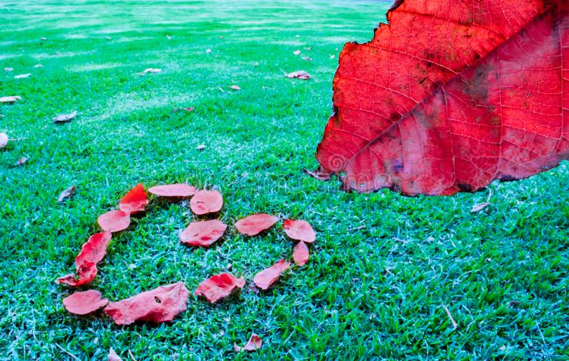 Hoja y corazón rojos imagen de archivo