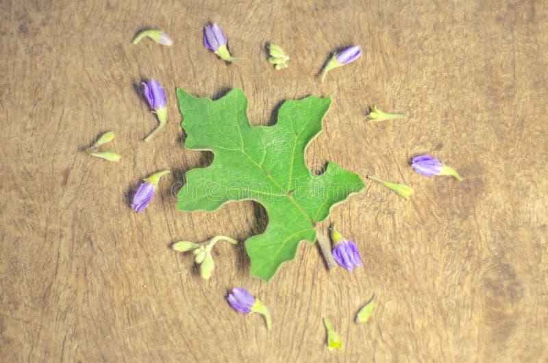 Hoja y flores de la berenjena en el tablero de madera foto de archivo libre de regalías