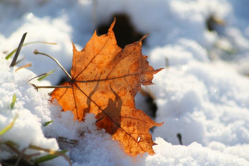 Hoja y nieve foto de archivo libre de regalías