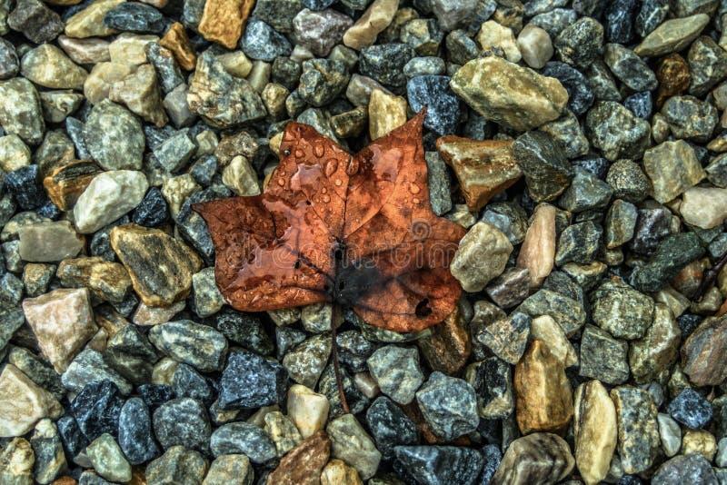 Hoja y rocas imagenes de archivo