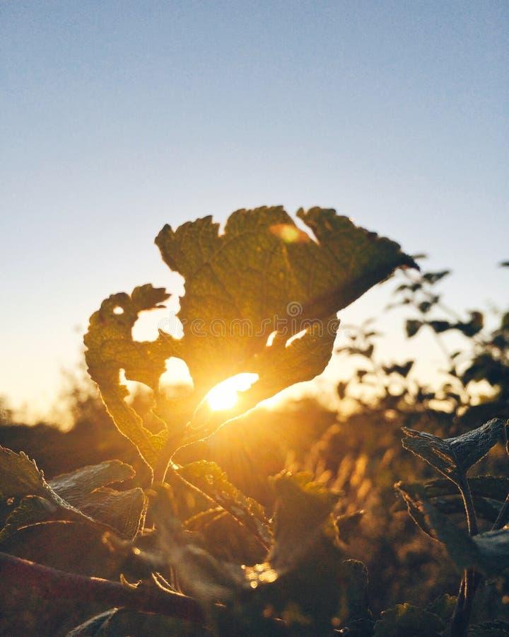 Hoja y sol verdes foto de archivo