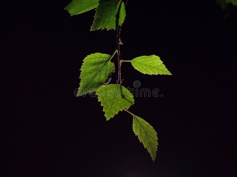 Download Hojas foto de archivo. Imagen de vida, verde, dios, religión - 175742