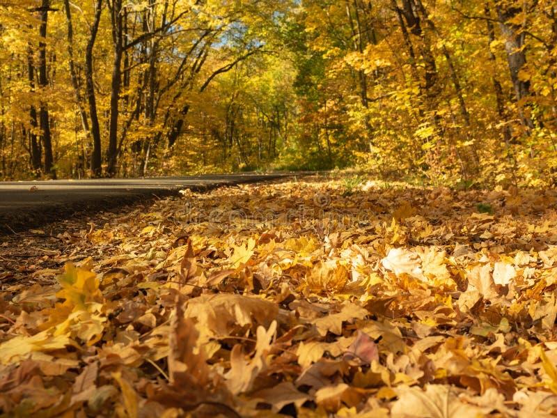 Hojas amarillas en el borde del camino de la carretera de asfalto en otoño Bosque en octubre Follaje de otoño en la madera Arco d fotos de archivo libres de regalías
