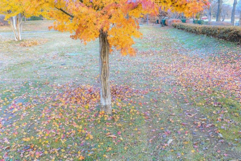 Hojas amarillas en rama de árbol en el authumn, hoja del otoño contra a fotos de archivo libres de regalías
