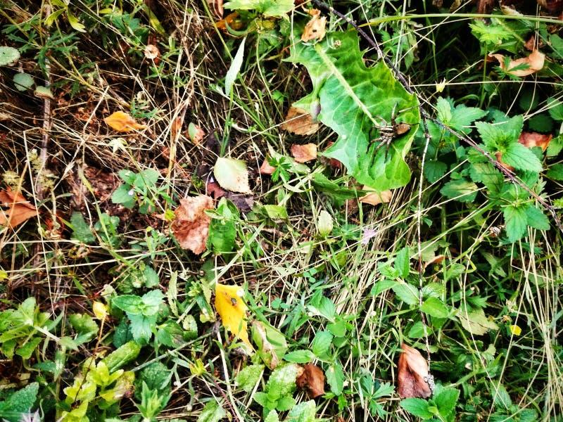 Hojas, araña, hierba, otoño foto de archivo