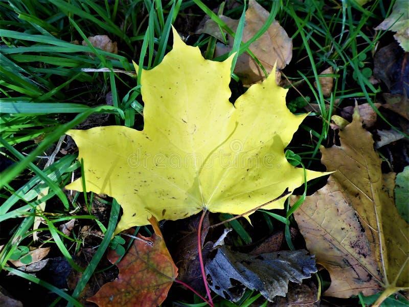 Hojas Autumn Motives imágenes de archivo libres de regalías