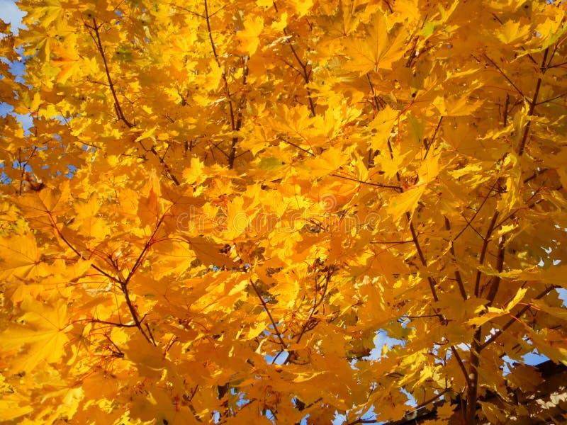 Hojas Autumn Motives fotos de archivo libres de regalías