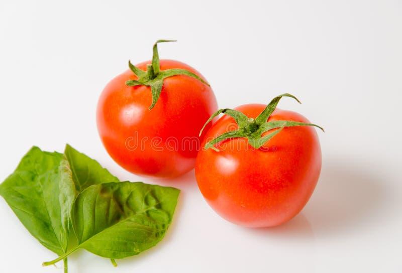 Hojas basílicas de la pizca roja del tomate fotos de archivo
