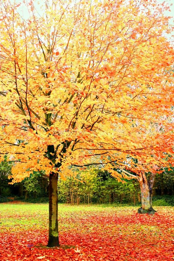 Hojas brillantes en otoño. fotos de archivo