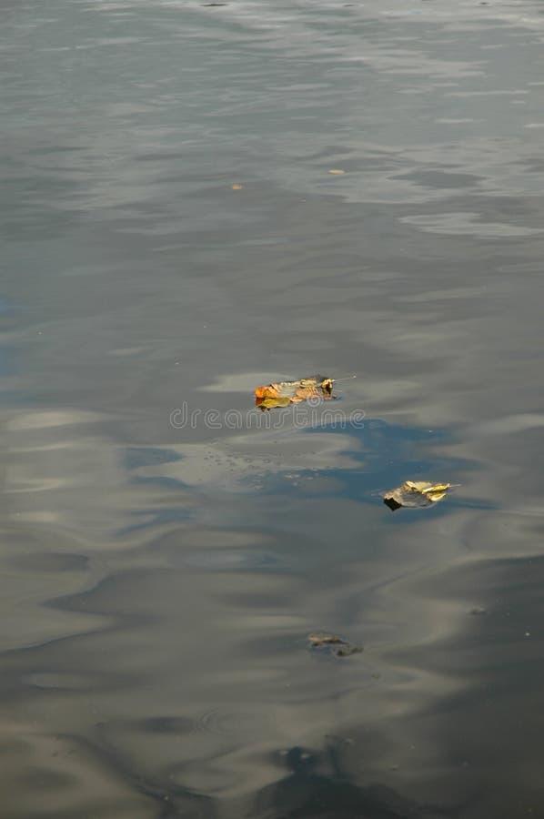 Hojas caidas en el lago fotografía de archivo libre de regalías