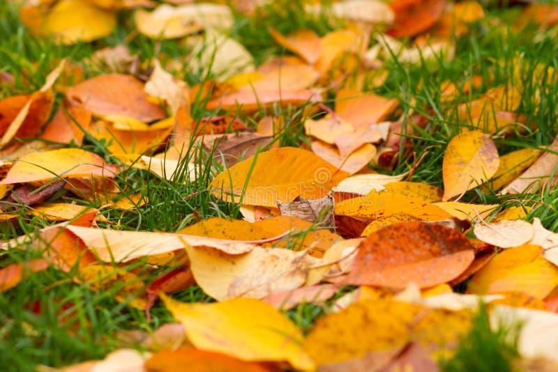 Hojas caidas en hierba fotografía de archivo