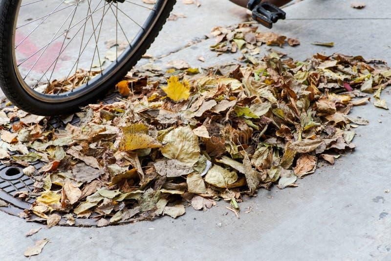 Hojas caidas secas que barren, limpieza de la acera del otoño fotografía de archivo libre de regalías