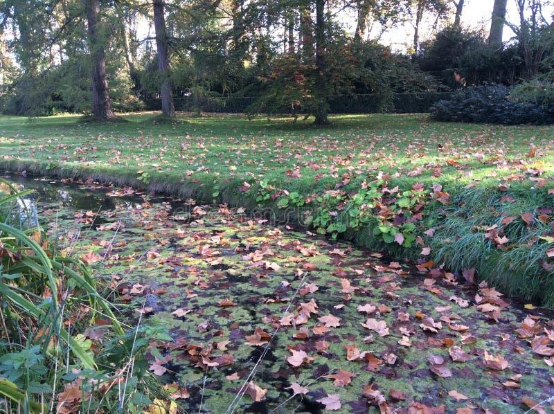 Hojas coloreadas parque del río de Autumn Fall foto de archivo