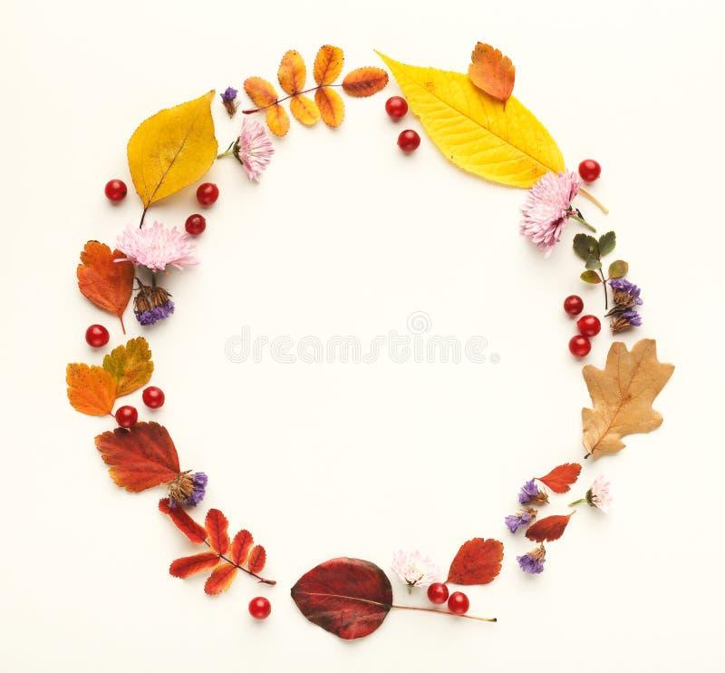 Hojas coloridas del otoño en el marco del círculo aislado en blanco imagenes de archivo