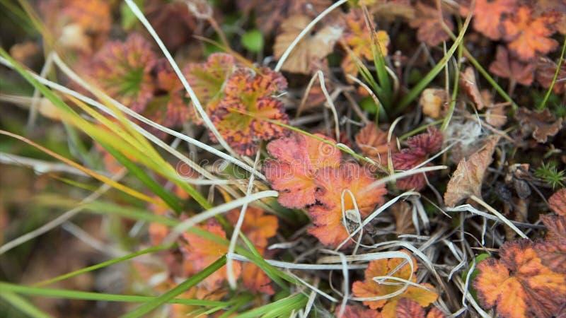 Hojas coloridas del otoño en fondo de la hierba verde Visión superior Moje las hojas de otoño amarillas en la hierba verde, visió fotografía de archivo