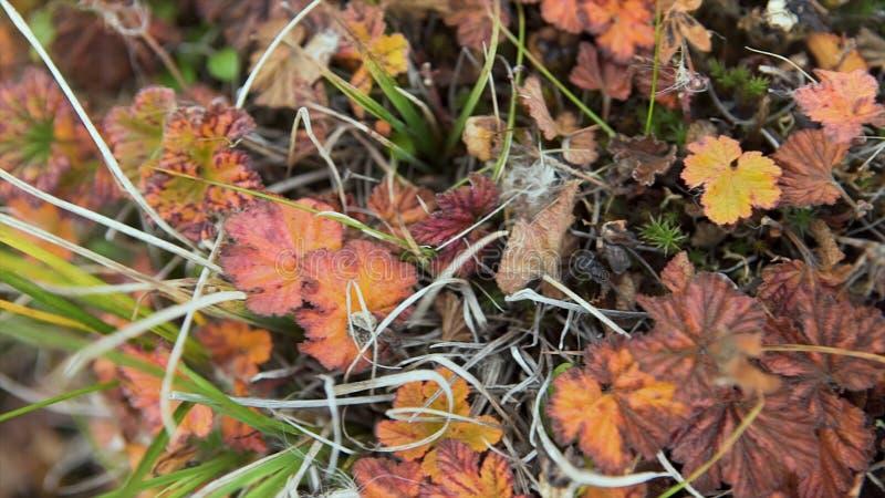 Hojas coloridas del otoño en fondo de la hierba verde Visión superior Moje las hojas de otoño amarillas en la hierba verde, visió foto de archivo