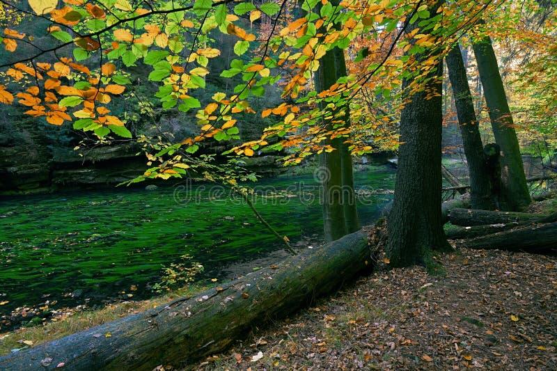 Hojas coloridas del paisaje del otoño el mañana de los árboles en el río imagen de archivo libre de regalías