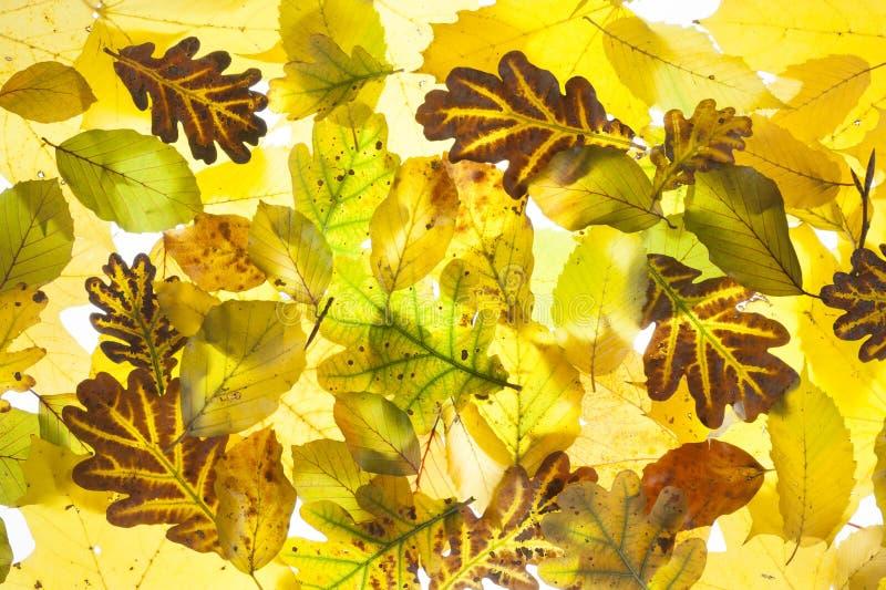 Hojas coloridas en el otoño fotos de archivo