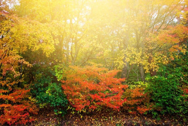 Hojas coloridas en el parque del otoño contra puesta del sol imagenes de archivo
