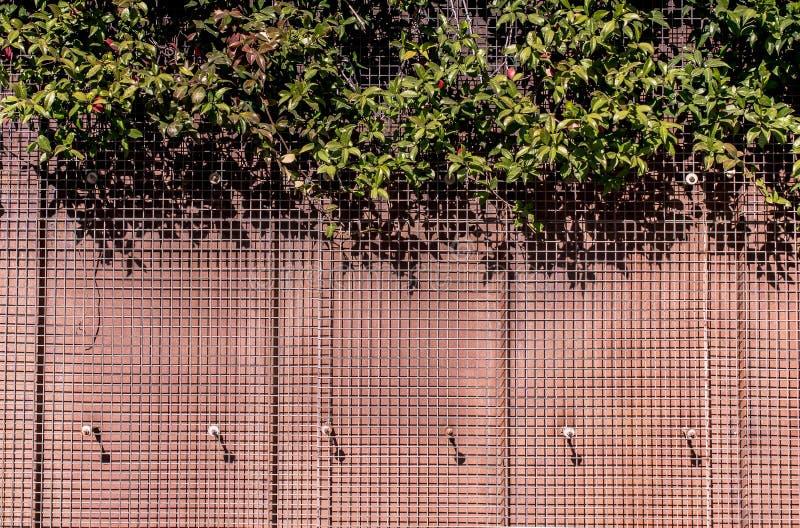 Hojas como fondo vegetal floral foto de archivo libre de regalías