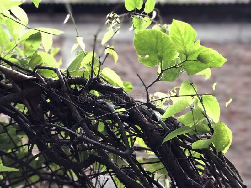 Hojas con las ramas imagen de archivo