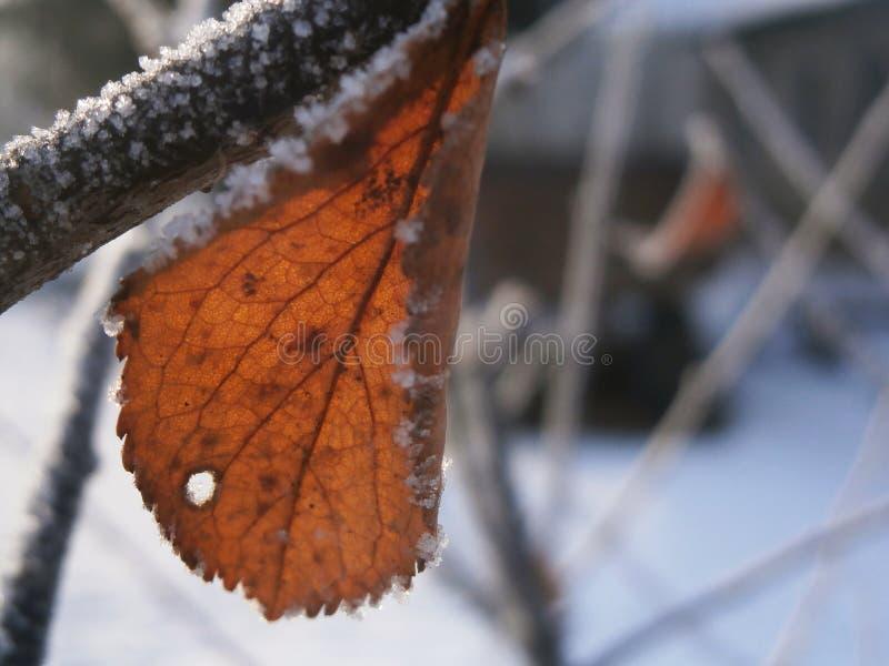 Hojas congeladas 1 foto de archivo libre de regalías