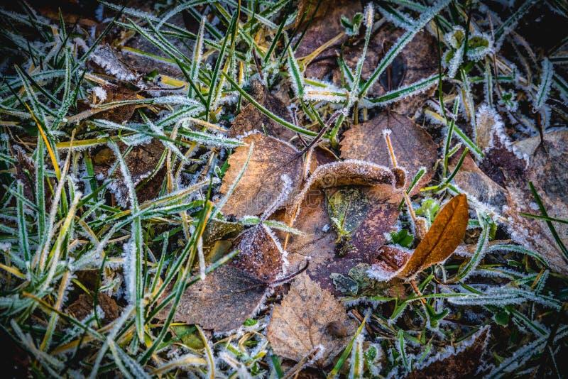 Hojas congeladas en la tierra fotografía de archivo libre de regalías