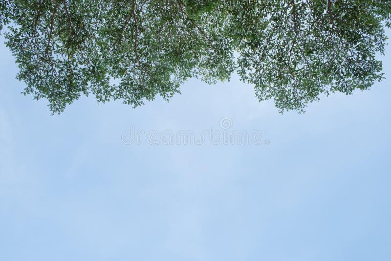 Hojas contra el cielo azul fotografía de archivo