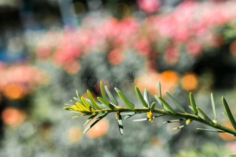 Hojas de árbol como fondo de vegetación floral imagen de archivo