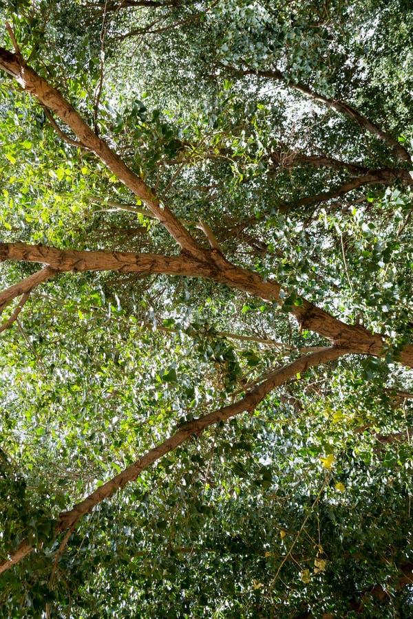 Hojas de árbol silvestres bajo la luz del sol fotografía de archivo libre de regalías