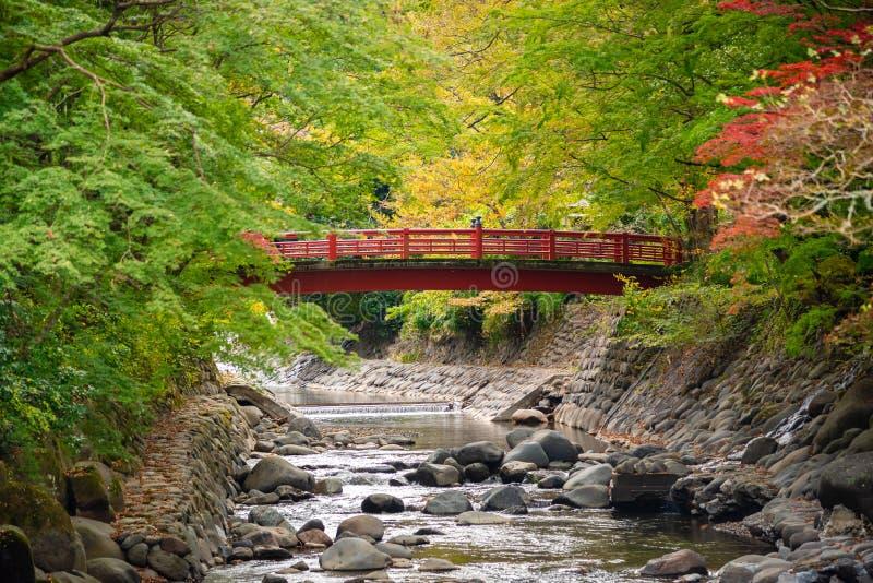 Hojas de arce coloridas en otoño con fondo de puente de madera roja sobre un pequeño arroyo foto de archivo libre de regalías
