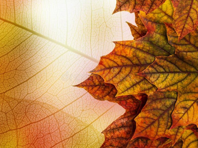 Hojas de arce del otoño fotos de archivo