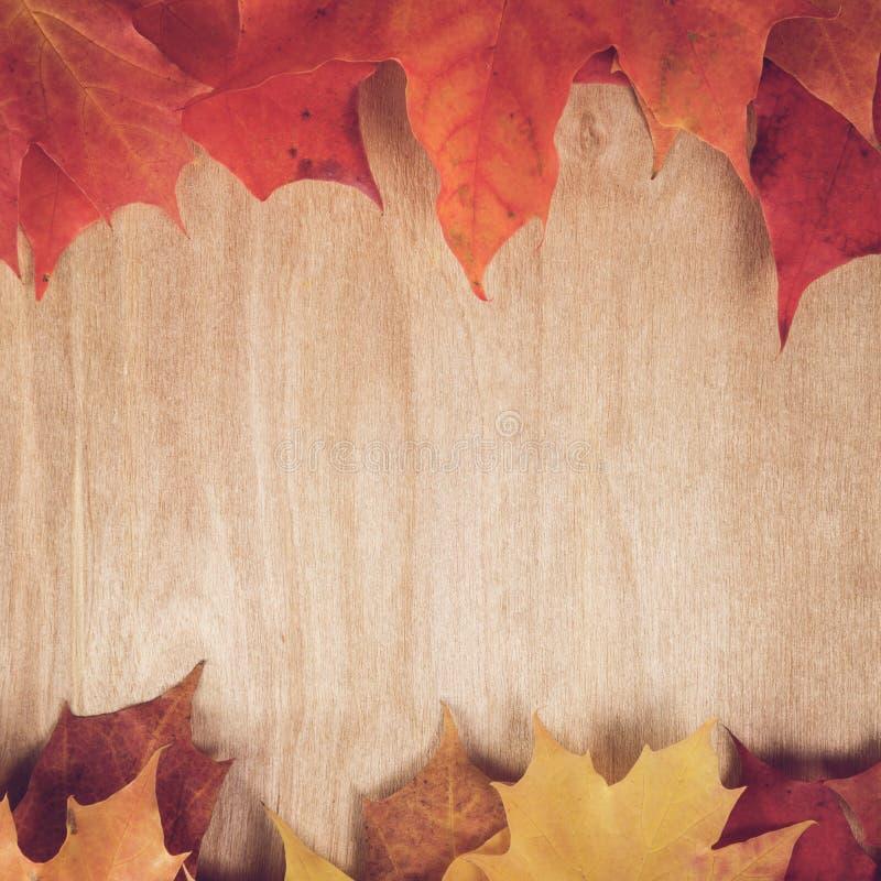 Hojas de arce del otoño en la tabla de madera ilustración del vector