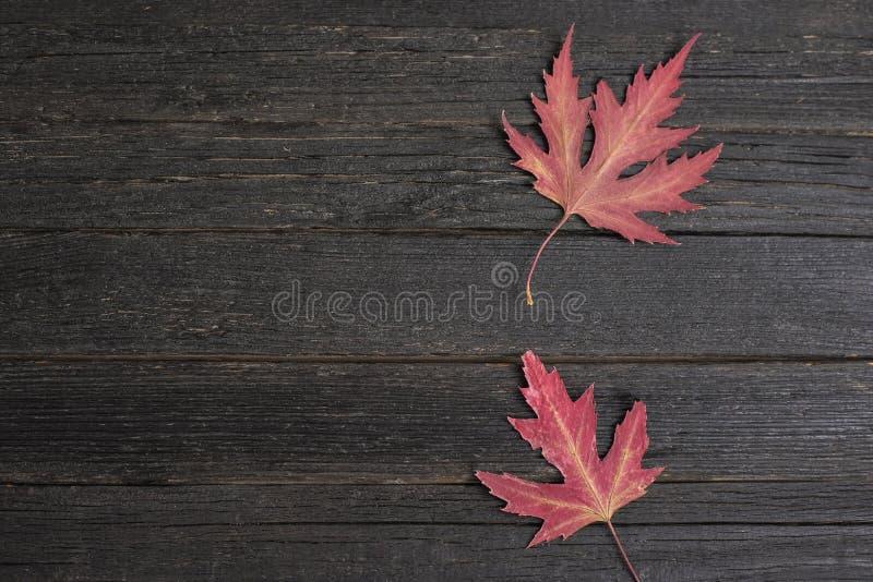 Hojas de arce rojas en un fondo de madera oscuro Concepto del otoño fotos de archivo