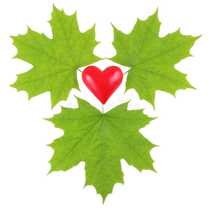Hojas de arce verdes que rodean un corazón plástico rojo fotos de archivo