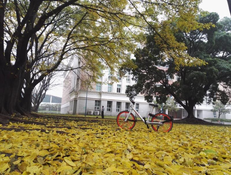 Hojas de hojas caducas después de la lluvia imágenes de archivo libres de regalías