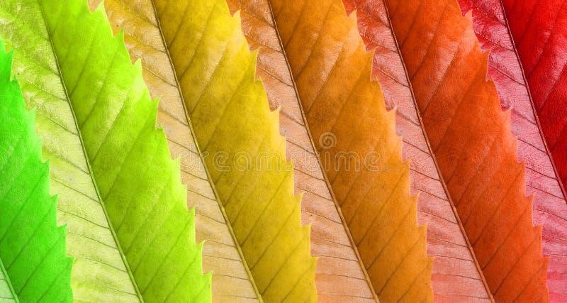 Hojas de Colorfull fotos de archivo