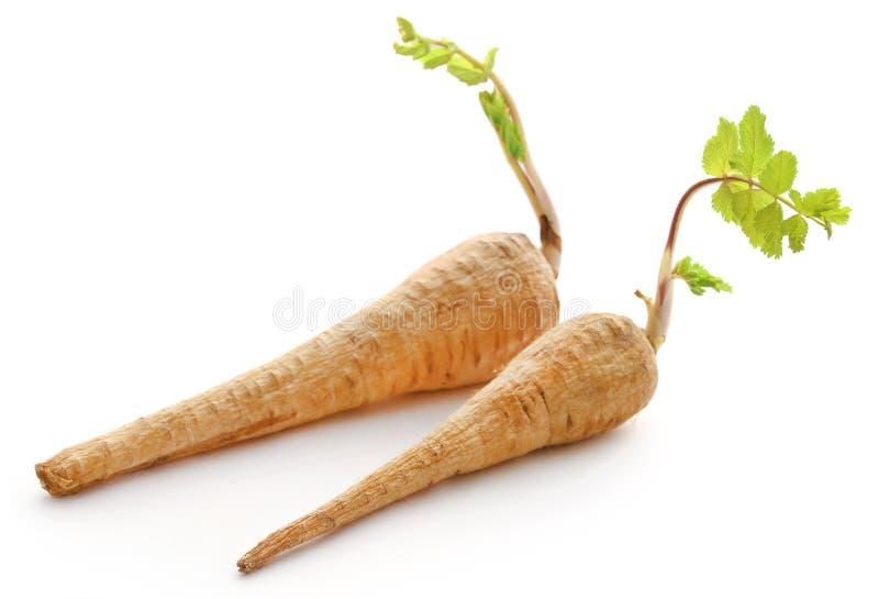 Hojas de extensión de la zanahoria después de cosechar foto de archivo libre de regalías