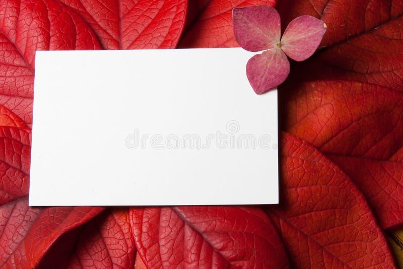 Hojas de la caída con la floración y la tarjeta en blanco fotos de archivo libres de regalías