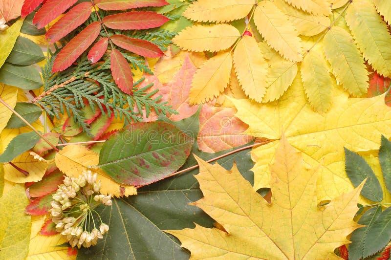 Hojas de la caída del otoño fotografía de archivo libre de regalías