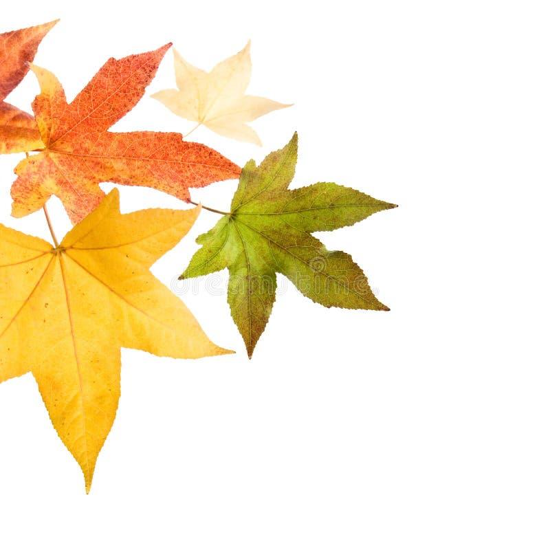 Hojas de la caída del otoño imágenes de archivo libres de regalías