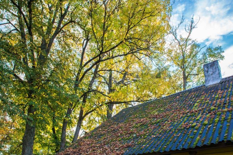 Hojas de la caída en un tejado foto de archivo