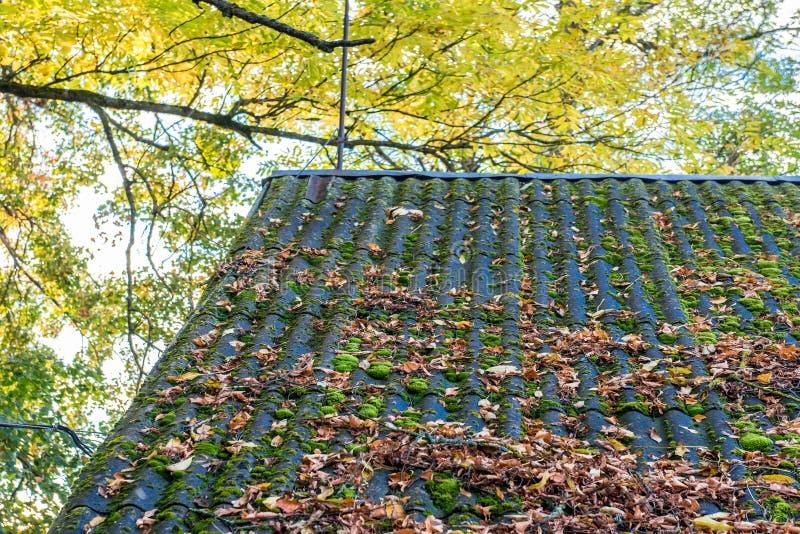 Hojas de la caída en un tejado imagen de archivo