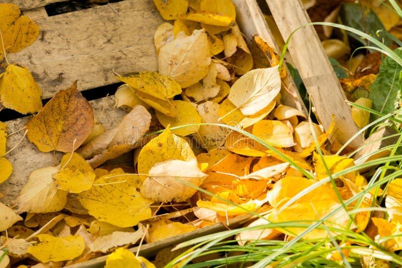 Hojas de la caída y caja de madera imagen de archivo libre de regalías