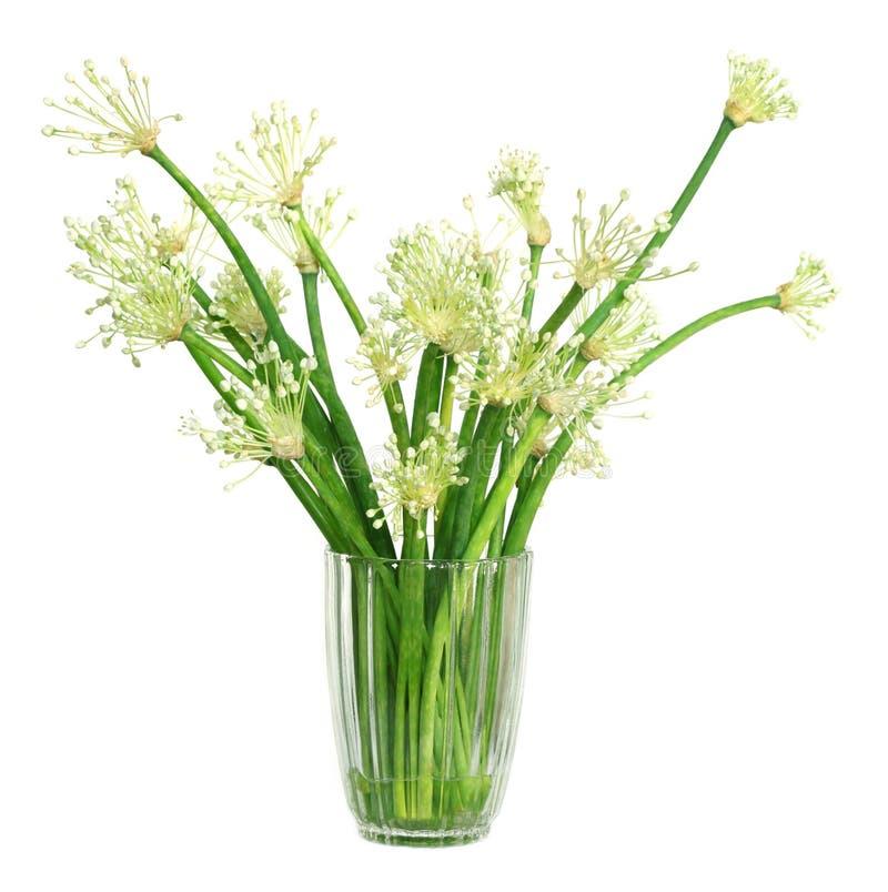 Hojas de la cebolla con las flores imagenes de archivo