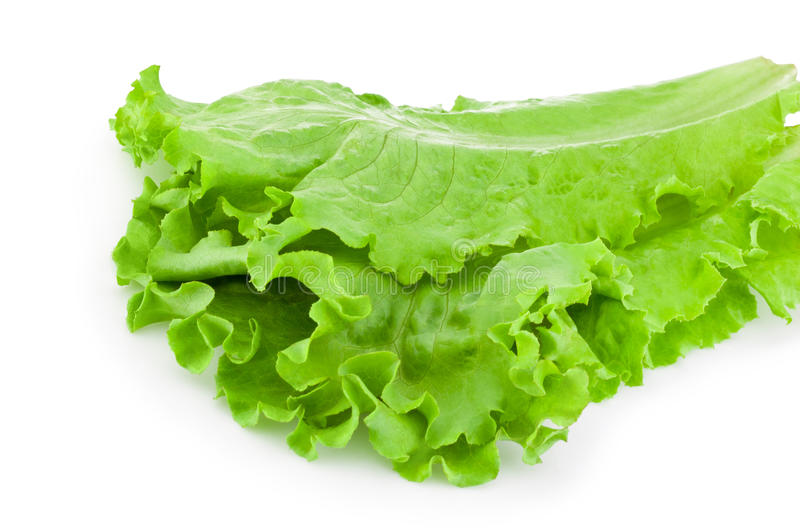 Hojas de la ensalada verde de la lechuga aislada en el fondo blanco foto de archivo