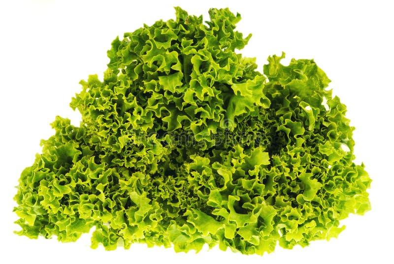 Hojas de la ensalada verde en un fondo blanco imagenes de archivo