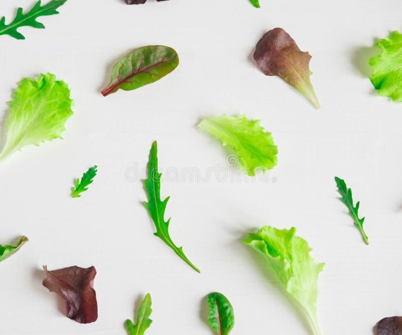 Hojas de la ensalada verde en un fondo blanco Modelo con las hojas de la lechuga Diseño del fondo con las hojas para la ensalada  imagen de archivo