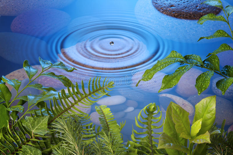 Hojas de la gota del agua de la naturaleza fotos de archivo